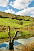 Tree stump reflected in scenic lake — Stock Photo