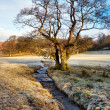 Bare Winter Tree Alongside Stream — Stock Photo