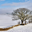Stone Wall In Winter Snow — Stock Photo