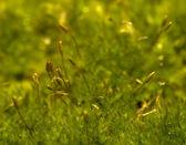 зеленый мох — Стоковое фото