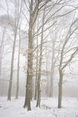 Winter forest in the fog — Stock Photo