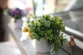绿色的植物在罐子里 — 图库照片