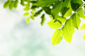 Green leave on sky — Stock Photo