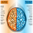 Human brain left and right functions — Stock Photo #8199137