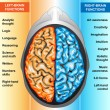 Human brain left and right functions — Stock Photo #8199243