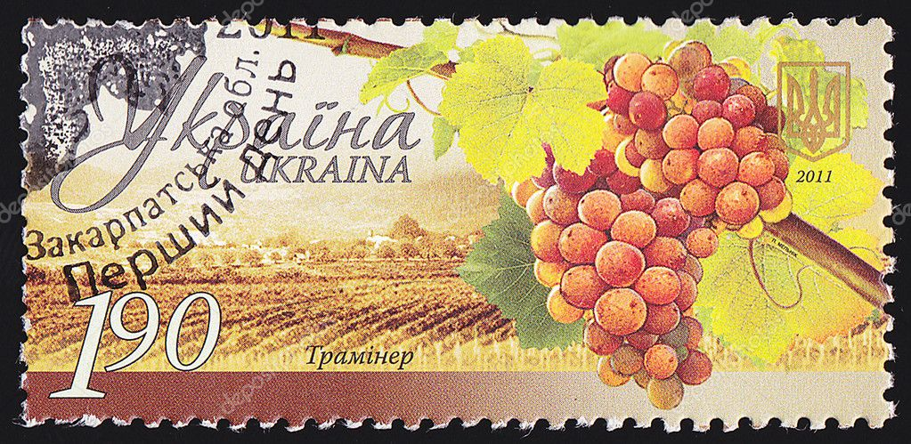 UKRAINE - CIRCA 2011: A post stamp printed in Ukraine shows grapes Traminer ,series Winemaking in Ukraine , circa 2011.  Stock Photo #10403795
