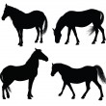Vector horse silhouettes — Stock Vector #8868474