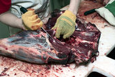 Dressing of deer carcass — 图库照片