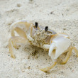 Crab on the beach — Stock Photo