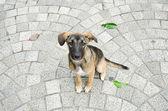 Dog sitting on the brick floor. — Stock Photo