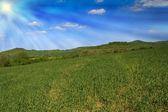 Idyllic wheat field and sunshine — Stock Photo