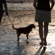 Women Walking The Dog — Stock Photo #8696798