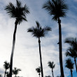 Palm Trees Silhouette — Stock Photo