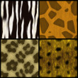 Stock Photo: Animal Print Collection