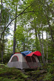 Forest Tent Camping — Stock Photo