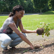 Woman Planting Flowers - Photo