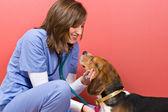 Check-up veterinário — Foto Stock