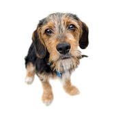 Cute Puppy Dog Sitting — Stock Photo