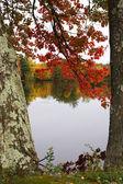 Spadek liści — Zdjęcie stockowe