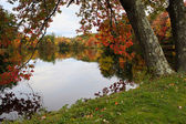 New England Foliage — Stock Photo