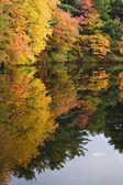 Connecticut Autumn Foliage — Stock Photo