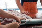 Fishermen Cleaning Blue Fish — Stock Photo
