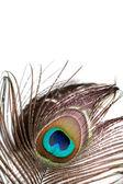 Pluma de pavo real — Foto de Stock