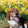 Dog In the Flowers — Stock Photo