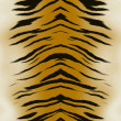 Royalty-Free Stock Photo: Tiger skin