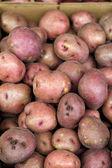 Red Potatoes — Stock Photo