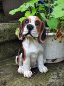 Schattig beagle — Stockfoto