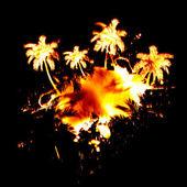 Fiery Palm Trees — Stock Photo