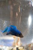 Лучшая рыба — Стоковое фото
