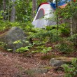 Forest Tent Camping — Stock Photo #9240566
