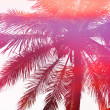 Abstract Palm Tree Sunset — Stock Photo