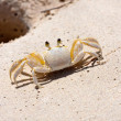 Tropical Crab — Stock Photo