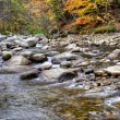 Autumn River Foliage — Stock Photo