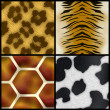 Animal Print Collection — Stock Photo