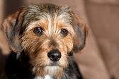 Roztomilý smíšené plemeno štěně — Stock fotografie