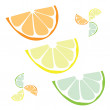 Citrus Slices Vector — Stock Vector