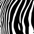 Zebra Stripes Vector — Stock Vector #9295074