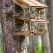 A starling house for birds somewhere in a forest - Stock Photo