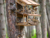 A starling house for birds somewhere in a forest — Stock Photo