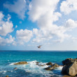 Seascape — Stock Photo #8923013