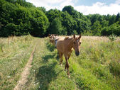 A herd of horses moves along the field — Stock Photo