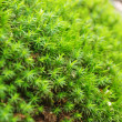 Bright green sprouting moss somewhere in a forest. Shallow DOF. - Stock Photo