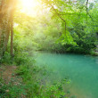 The last sun rays shine peaceful and quiet place in a forest - Stock Photo