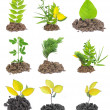 Stock Photo: Plant growth