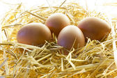 Eggs upon the straw — Stockfoto