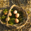 Fresh eggs on moss and straw — Stockfoto